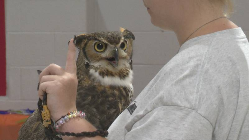 Among the special guests were Hootie the Owl, Buddy the Owl, and Neo the Hawk.