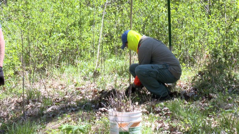 Volunteer crouches down, making sure a seedling is planted firmly in the ground.